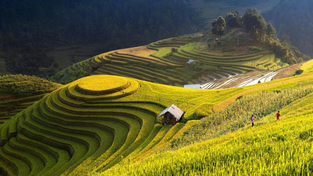 Rice Scape Mu Cang Chai Vietnam