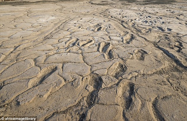 The Huge Collection Of Footprints Was Discovered On Mudflats