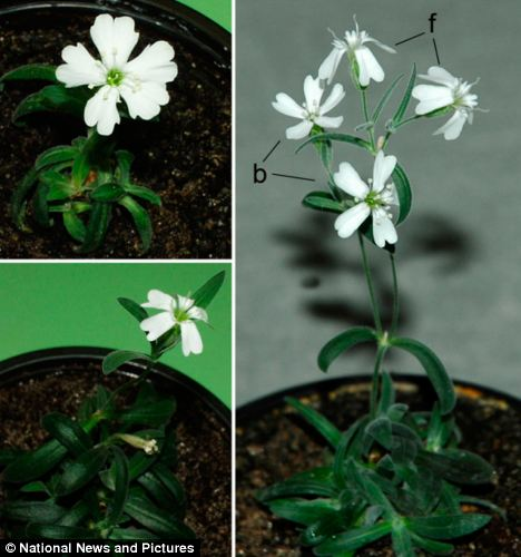Ancient Plant Brought Back To Life AfterBeing Buried