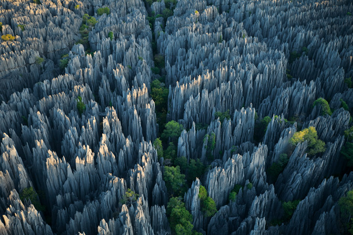 Is there Life At Stone Forest, Madagascar?